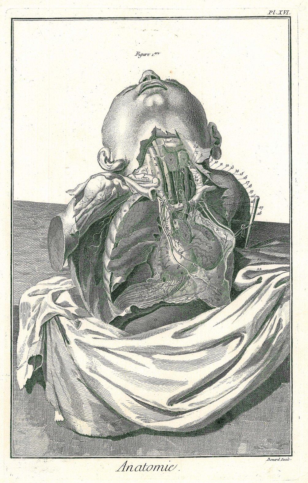 MEDIZIN. - Anatomie. - Rumpf.